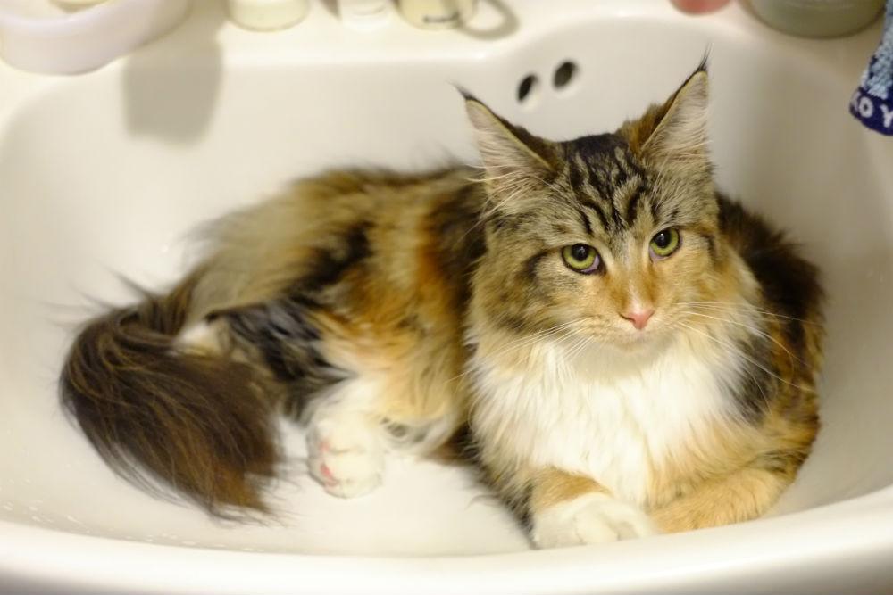 洗面台に収まるみりんちゃん